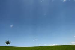 Einsamer Baum in blau/grüner Weite....