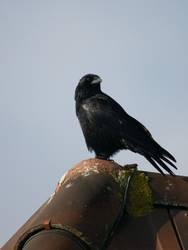 Lieber einen Spatz in der Hand als die Krähe auf dem Dach...