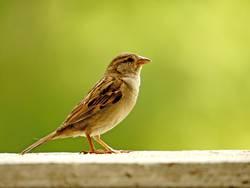 Vogelausstellung...