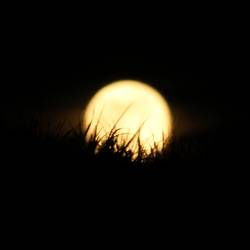 Das Gras im Mond