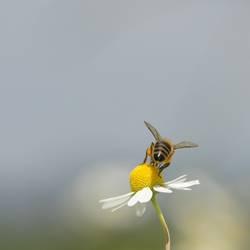 Du kannst mich Mal... (Gedanken einer Biene beim Fotoshooting)