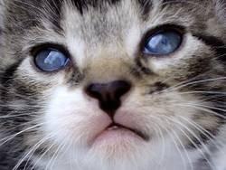 sweet cat (colour)