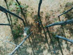 An aerial view of a hiker in the woods looking up