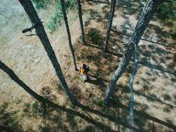 Aerial view of a hiker walking through the woods.