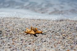 A starfish on the sand