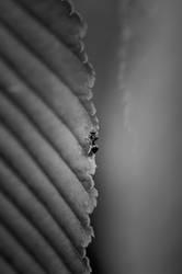 Ameise auf der Blattkante