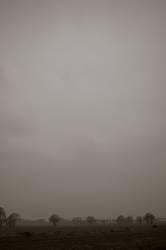 Heide bei Nebel am Fluss