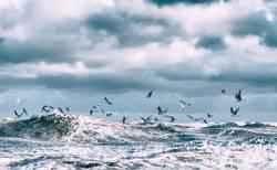 Sturm Herwart und die Ostseemöwen