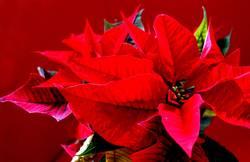 weihnachten mit stern