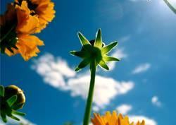 Blumenschein