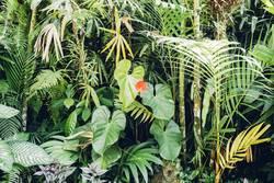 Indonesischer Garten