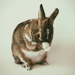 Kaninchen, Hase, Osterhase