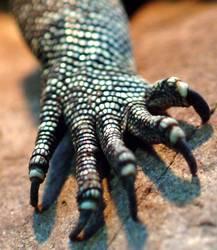 Drachenhand