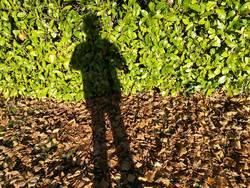 Schatten eines fotografierenden Mannes im Herbst