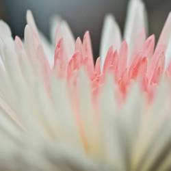 weiß-rosa-weiß-grau