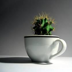 A CUP OF MESKALIN