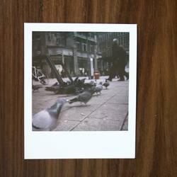 Hamburg.Tauben.Polaroid