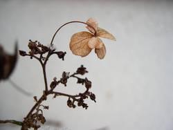 Blume im Frost