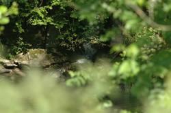 Am Fluß 1