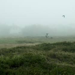 Dünenheide auf Hiddensee