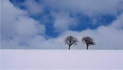 two trees (cold)