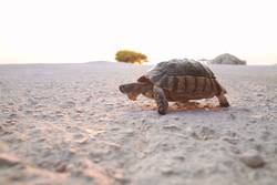 Turtle on the run