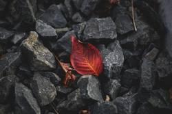Herbstblatt zwischen Steinen