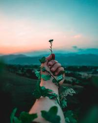 Tiny flower in hand
