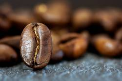Eine Kaffeebohne