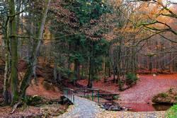 Herbstwald mit Brücke