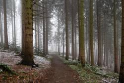 Waldweg mit Nebel und etwas Schnee