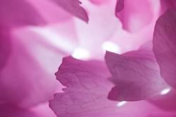 Licht in der Kirschblüte