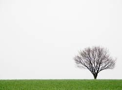 Lonely little tree