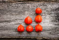 rote Physalis in Diagramform auf grauem Holz