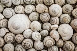 Snail house pattern.