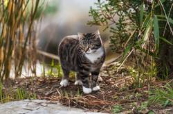 Wo wohnen Katzen?