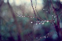 Natural Tears