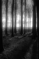 Neulich im Silberwald