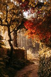 Autumn path with red and orange leaves and fog