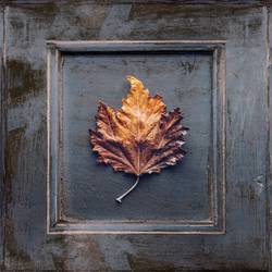 Wooden frame with an dried leaf in the center
