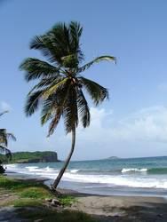 Die perfekte Palme