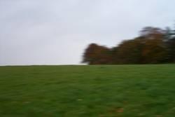 lauf Forest