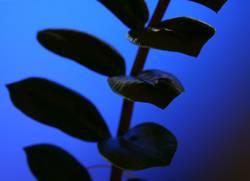 Komische Pflanze 3