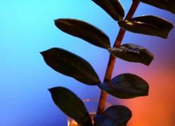 Komische Pflanze 1