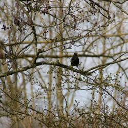 Frühlingsvogel 2