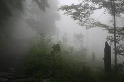 Nebelspaziergang II