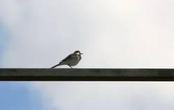 Frühlingsvogel 3