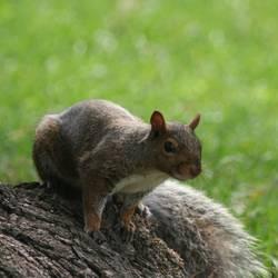 Lieblingstier: Eichhörnchen! Teil 3