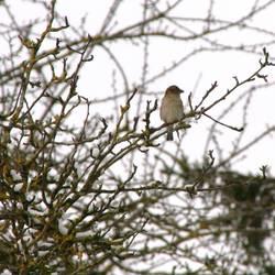 Frühlingsvogel 1
