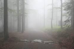 Nebelspaziergang III